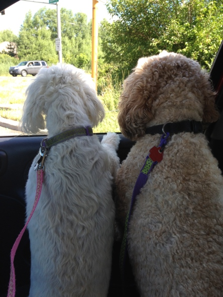 Cooper and Zoë on the way to get haircuts!!